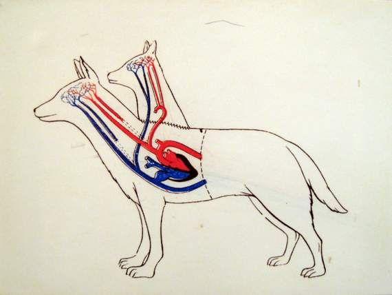 vladimir-demikhov-8217-s-two-headed-dog1-1297950805.jpg (570×428)