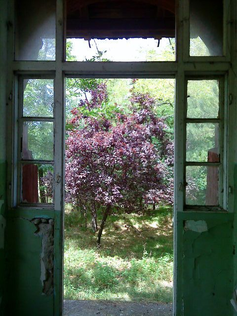 door  tree  garden  old  abandoned