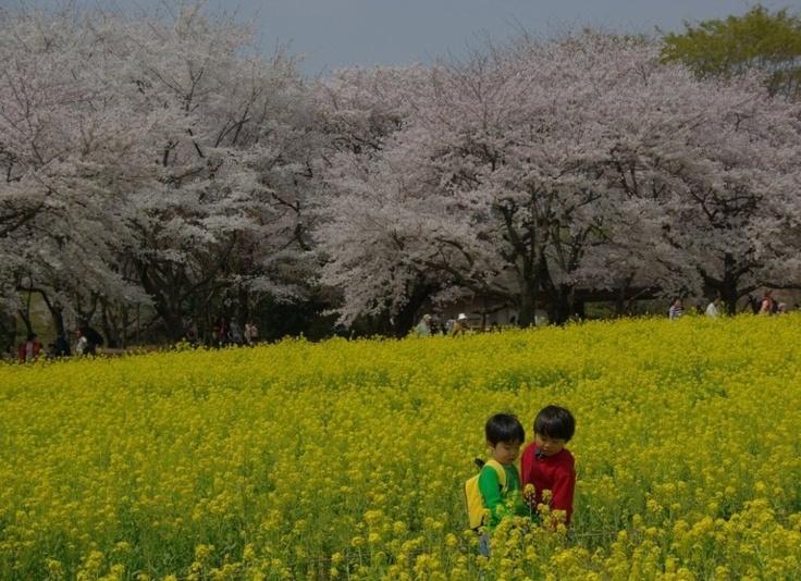 Showa Kinen Park, Nishi Tachikawa Japan