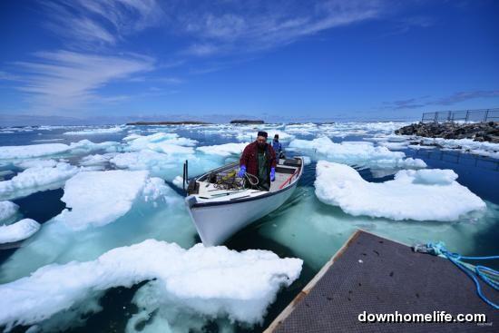 Ice Fishing Newfoundland Style