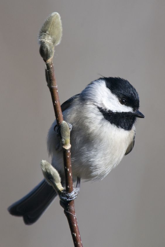 55 Unique Images Of Birds That You Will Love | FallinPets