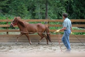 """Round pen work - """"Concentrate on driving the horse around the round pen soft at all gaits. While driving the horse, you should start to notice him consider looking toward you...you should move...while backing...increasing the distance between you two, this is called drawing. If he doesn't hook on like this, move back in behind him and help him travel onward. Think of pulling him off the fence with an invisible rope, and to pull you must back up..."""" (Buck Brannaman)"""