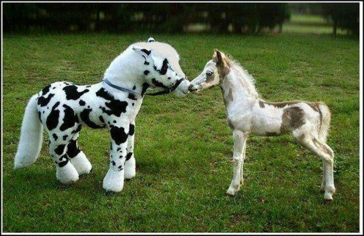 Horses are so sweet. Little miniature horse smaller than a stuffed animal! He likes it!