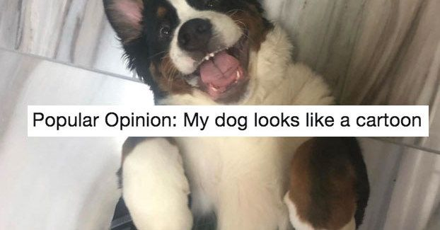 21 Dog Tweets You Absolutely Need In Your Life Right This Minute