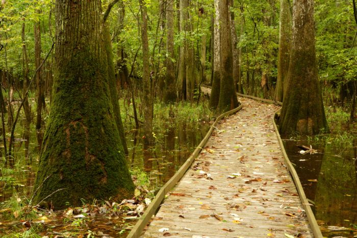 Hike The Boardwalk To Nowhere At Congaree National…