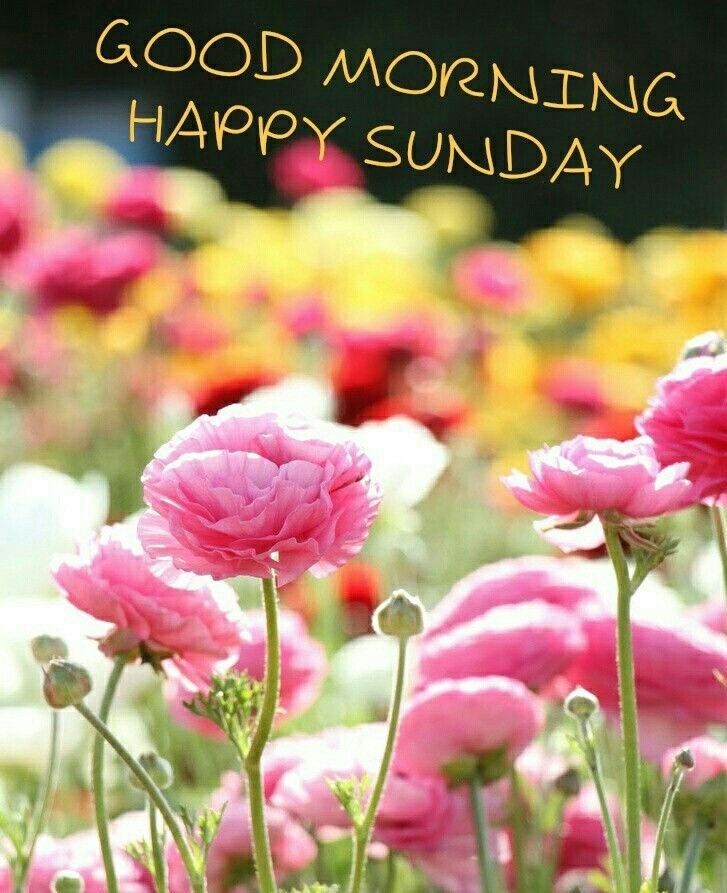 Sunday Good Morning Happy Sunday Happy Sunday Morning Good Morning Happy