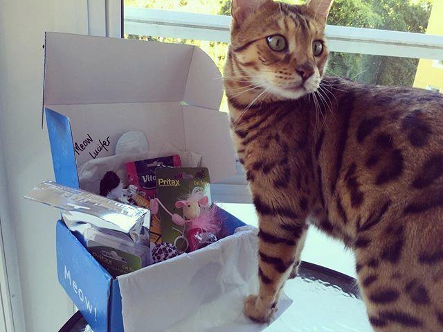 Lucifer testar Kattbox för första gången 😻 Lätt det absolut bästa vi gjort eftersom hans leksaker ofta lever korta liv 🙀 @kattbox_se #kattbox