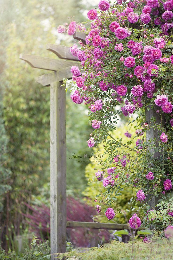 Japanese garden flowers lake garden spring beautiful art -  Hazy Days Romantic Rose Pergola In The Garden By Jacky Parker
