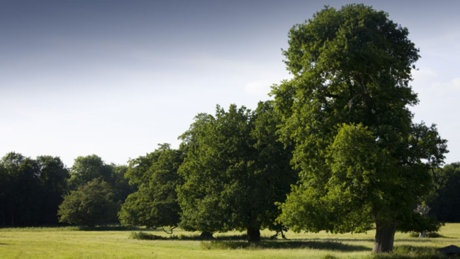 Hatfield Forest, near Bishop's Stortford - medieval royal hunting forest - some of the trees are 1,200 years old