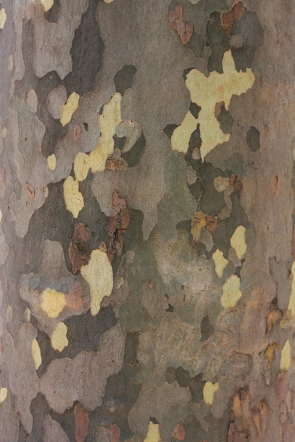 2011: A natural pattern. The London Plane bark's distinctive colors served as inspiration for the park staff's uniforms, designed by board member Stan Herman.