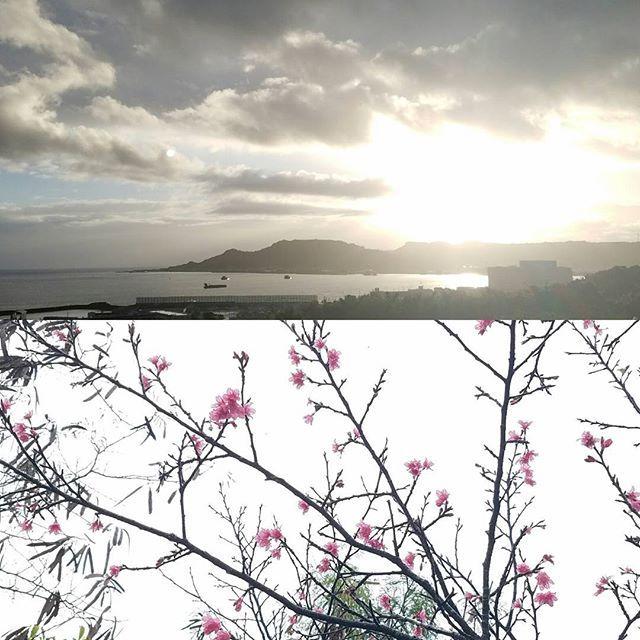 【mon8aya】さんのInstagramをピンしています。 《朝のマイナスイオン✨ 発見✨が多い🎵  #ぶらりウォーキング#朝#マイナスイオン #小さな幸せ#発見 #桜#朝日》