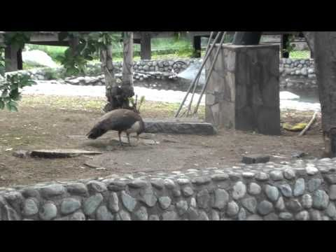 parque zoologico la pastora 3 de 4