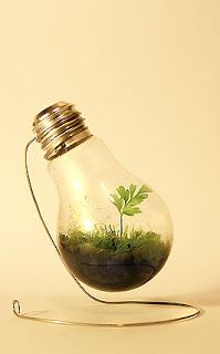 Bright Ideas for Incandescent Bulbs | Trashy Wench: The Queen of Creative Reuse: Gardens Ideas, Crafts Ideas, Trav'Lin Lights, Indoor Gardens, Minis Gardens, Greenhouses, Lights Bulbs, Terrarium, Diy Projects