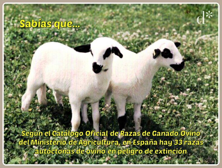 Sabías que... Comparte nuestra campaña para dar a conocer el mundo de la #oveja, la #lana y la #trashumancia