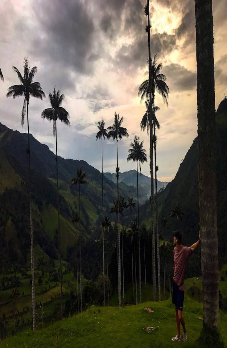 Guide: Cocora Valley - The world´s talles Palm Trees - Colombia