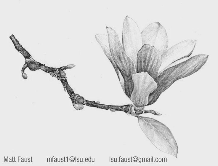 215 best current reference images on pinterest botanical