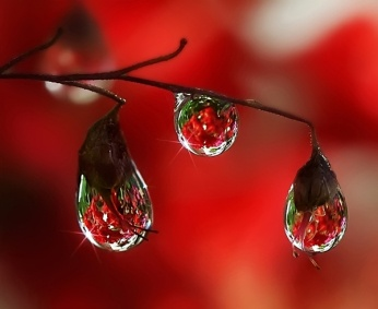 Best Water Droplets Images On Pinterest Water Droplets Dew - Amazing macro photography reveals hidden world
