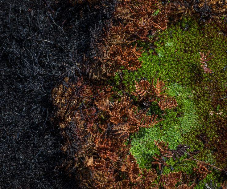 Tasmania bushfires leave world heritage area devastated – in pictures