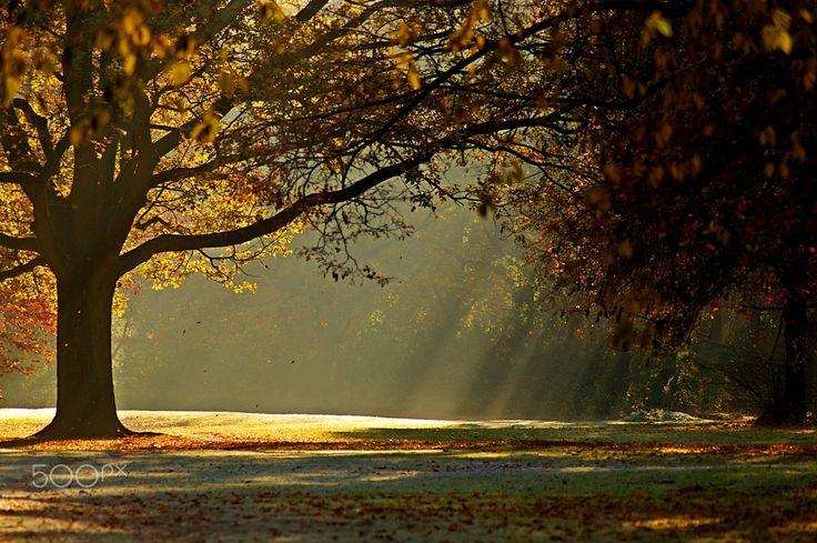 park autumn morning by Klaus Vartzbed on 500px