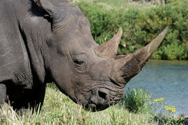 Great Fish River Nature Reserve--the best place globally to see black rhinos