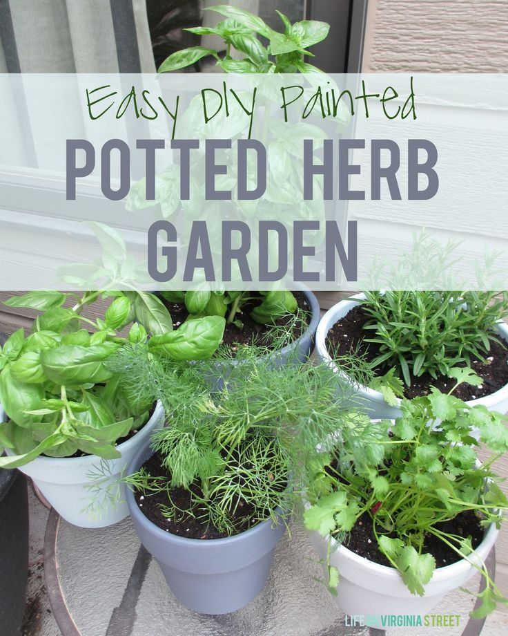 Easy DIY Painted Potted Herb Garden - love having fresh herbs readily available all summer and fall!