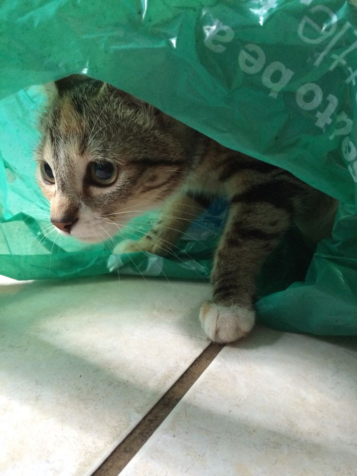 Cat in the bag, she said....