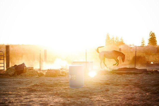 Down on the farm #turlock #California
