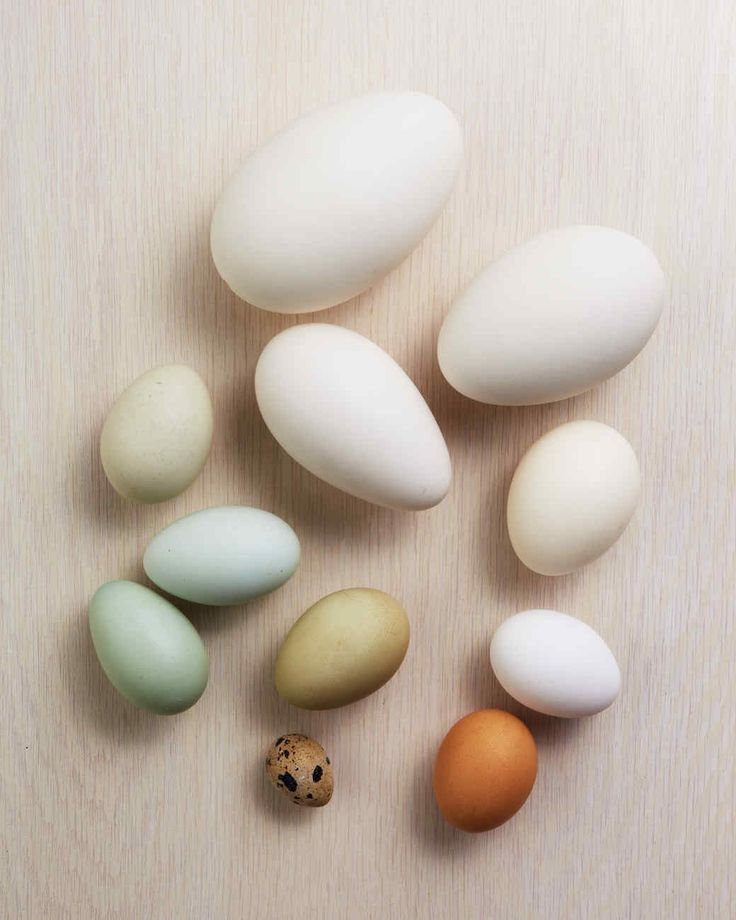 how to make different types of eggs Our guide to eggs including different types of eggs, sizes and nutritional information also includes various delicious recipes with the humble egg.