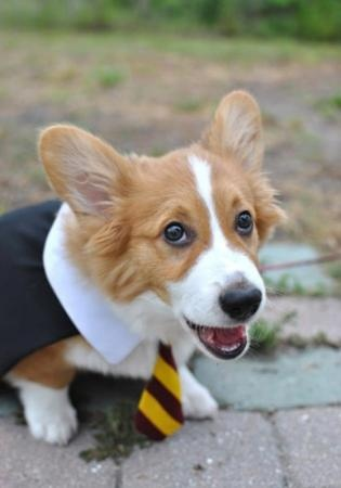 Not a big fan of dressing up your dog, but these doggies are adorable in their movie themed costumes.