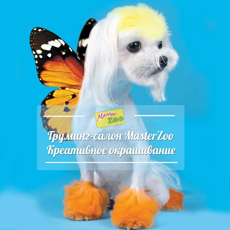 http://masterzoo.ua/grooming-saloni