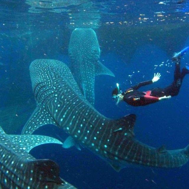Diving in Galapagos Islands #IsabelaIsland #SantaCruzIsland #FloreanaIsland…