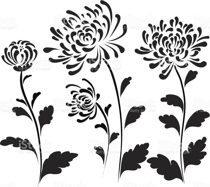 Chrysanthemum stock vector art 18012671 - iStock