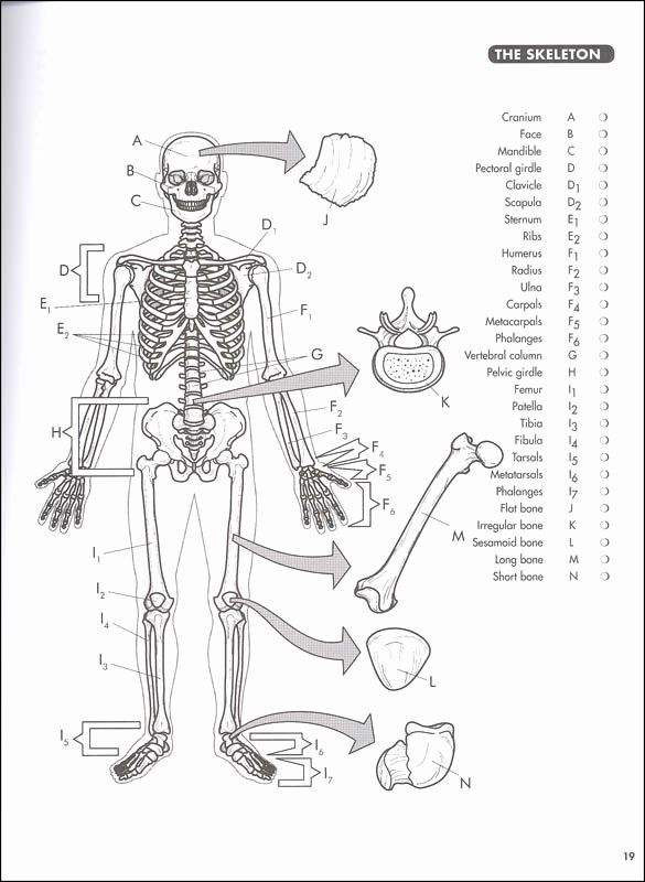 Gray 039 S Anatomy Coloring Book Awesome Anatomy Coloring Book Princeton Review 4ed Princeton Revie Anatomy Coloring Book Toddler Coloring Book Coloring Pages