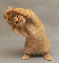 This little cat knows importance of always stretching after a workout. | The…