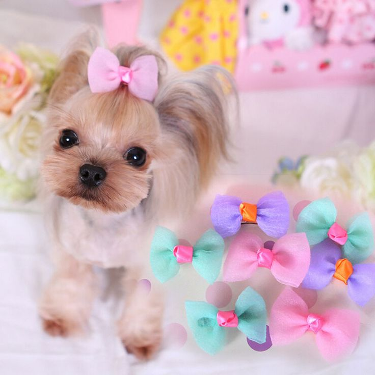 Cute Candy Color Pet Hair Clips Brand Designs Pink Blue