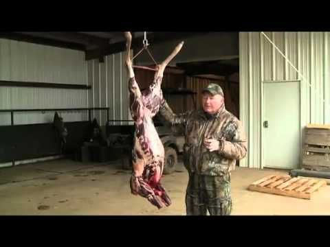 Butchering a Deer 101: Cleaning Station rather than field dress