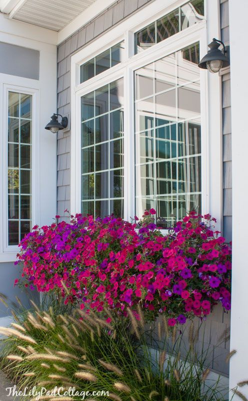 Window Boxes by the Lilypad Cottage