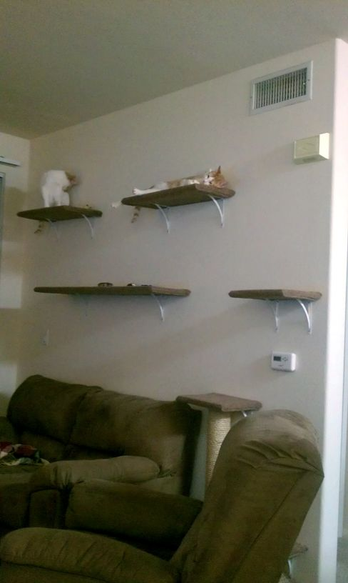 DIY Wall Mounted Cat Tree - there are a number on this site. Look pretty easy too.