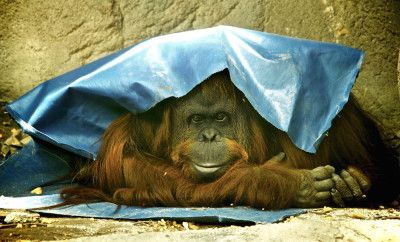 Animals Archives – Page 2 of 30 – Articles about Animals – Greener Ideal