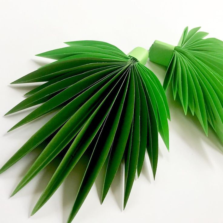 """239 Likes, 9 Comments - PAPER FLOWERS  (@candy_tree_baltimore) on Instagram: """"Palm leaves for your decor"""""""