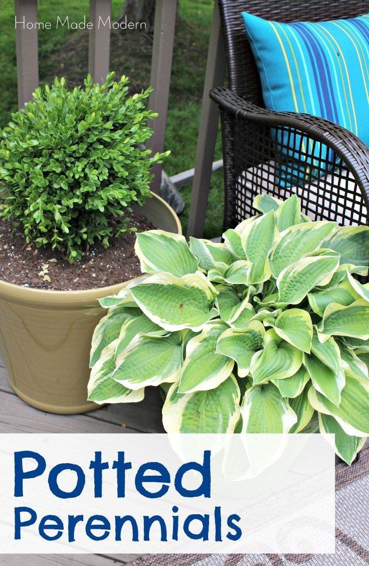 The secret to a better-looking patio: potted perennials.  Here are the ones that work the best.