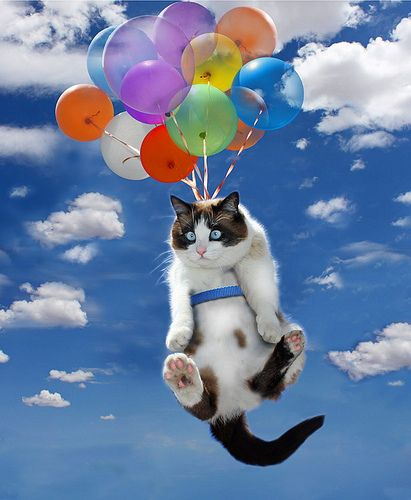 UP! Kitty...it is all the dog's fault!