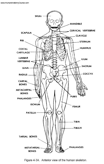 11 Best Anatomy And Physiology Class Tips Images On Manual Guide