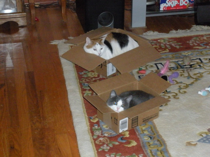 Our cats love boxes shia the calico and boots the grey