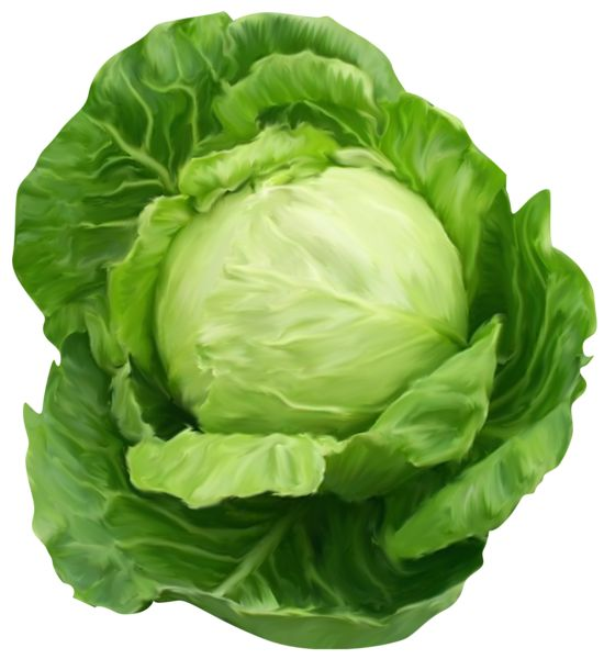 Cabbage Clipart Picture