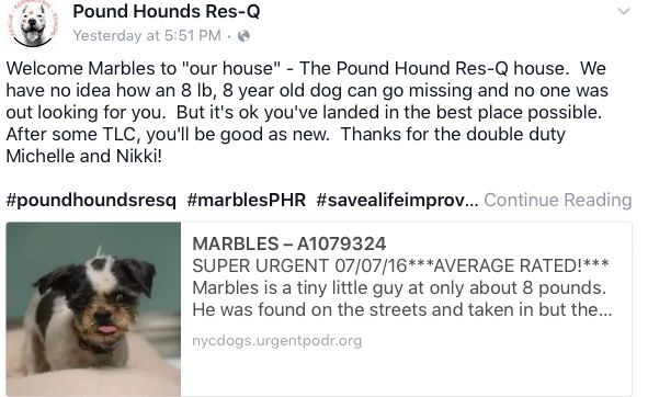 MARBLES IS SAFE WITH POUND HOUNDS❤️👍🏻❤️👍🏻❤️