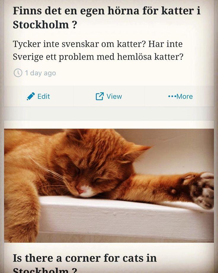 Klicka på länken i våran bio för att läsa vårt första blogginlägg om den svenska kärleken till katter #katt #katten #stockholm #kattunge #kattungar
