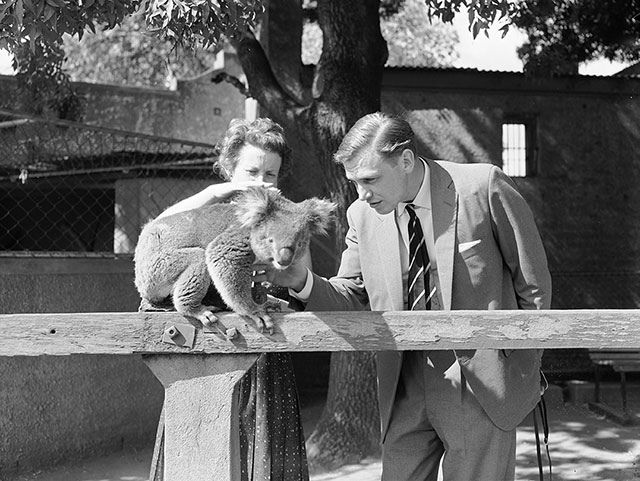 Caption: British broadcaster and naturalist, Sir David Attenborough patting a koala at Adelaide zoo. Photographer: Neil Murray  Production Company: Australian Commonwealth Film Unit  Producer: Stanley Hawes, Maslyn Williams, Frank Bagnall Director: Malcolm Otton, Loch Townsend, Richard Mason, Ian Dunlop Cinematography: Bruce Hillyard, William Trerise, R Pearse, J Leake, D Muir, J Shaw, L Elia   FAC Accession Number: FIA_48 Copyright: Film Australia Collection © NFSA For information about…