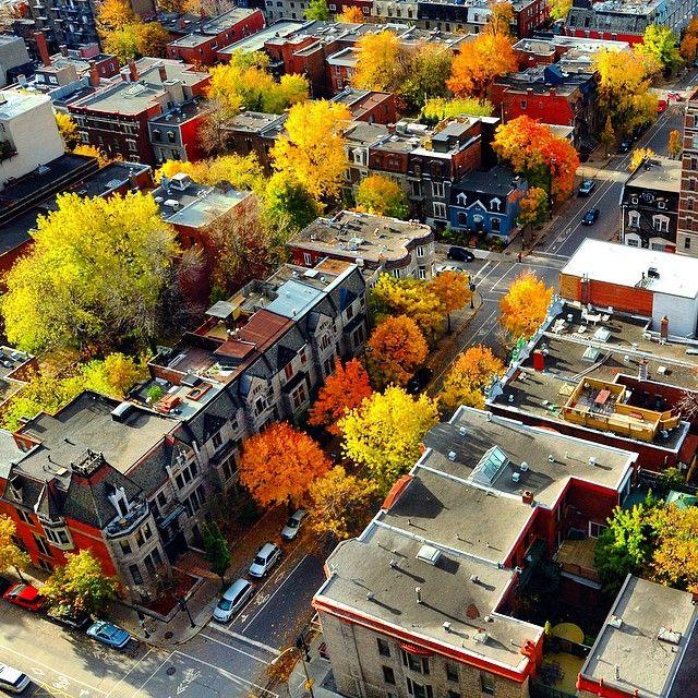 McGill Ghetto #montreal #travel
