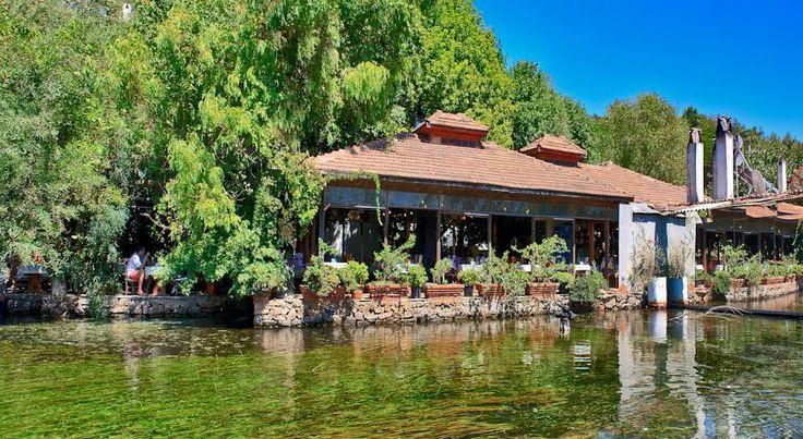 #AzmakhanOtel named after Azmak River is a cosy,comfortable and sincere hotel. #AzmakhanOtel ,adını Azmak Nehri'nden alan şirin, konforlu ve samimi bir oteldir . http://azmakhan.com.tr/ #AzmakhanOtel #Gökova #Muğla #Turkey #hotel #AzmakRiver #nehir #Türkiye #pool #havuz #vacation #holiday #tatil #swim #sun #nature #sports #doğa #sun #river #nehir #sauna #fish #balık #travel #gezi #restaurant